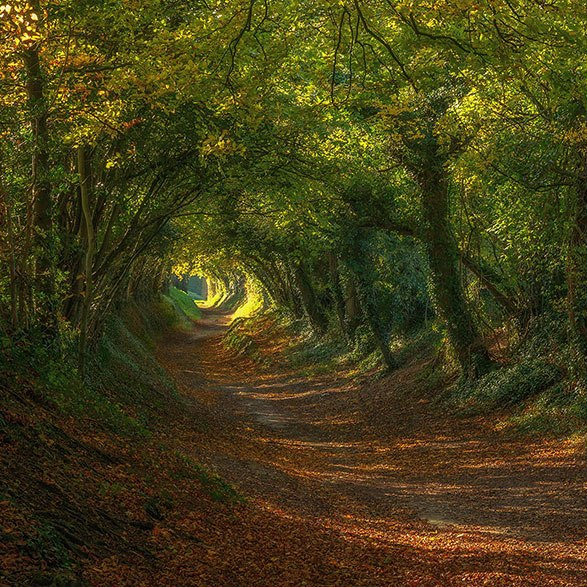 cropped-amazing-paths-10